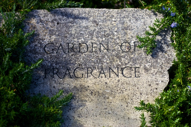 Joe Sterne Photography, San Francisco Botanical Garden, Google SF Photowalk, the Photowalk Alliance,