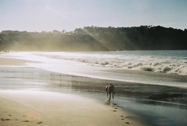 #projectfilm, baker beach, san francisco, bay bridge, joe sterne photography