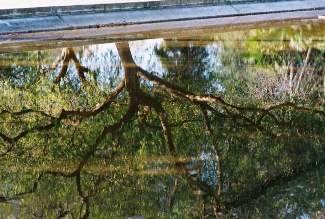 #projectfilm, macro, joe sterne photography, sunnyvale park, bay area