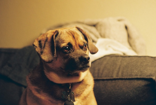 #projectfilm, macro, AE-1, 35mm, Joe Sterne Photography, Sunnyvale CA, puggle