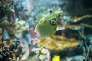 not so Sterne photography, joe Sterne, national aquarium, eos-m, baltimore, inner harbor